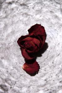 pétales de rose sur vortex