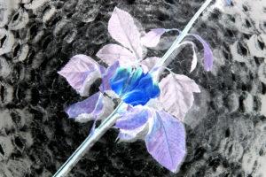 photo de fleur déposé sur un vortex de baiser noir et blanc